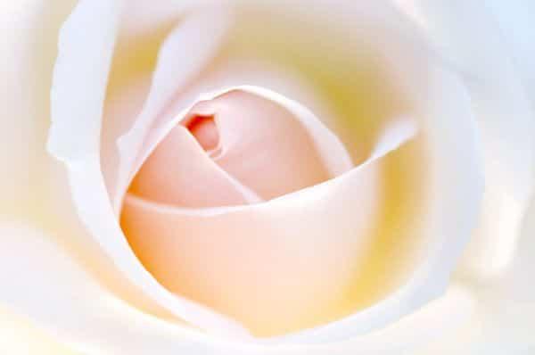 Rose - Über Birgit Danneberg